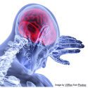 Virtual Training Seminar - Trauma Informed Policing: Understanding The Neurobiology of Trauma